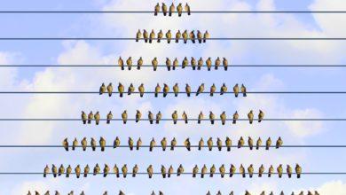 Photo of Wie flach dürfen Hierarchien sein?